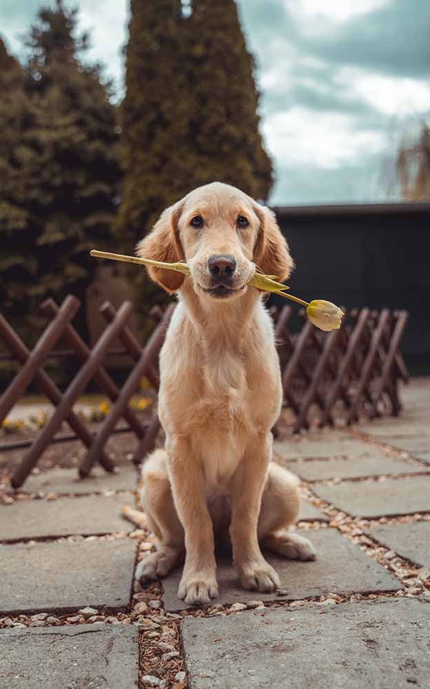 pet friendly exclusive use venues in the uk